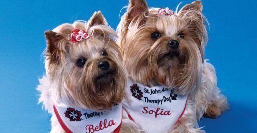 Aeroporto de Toronto tem cães terapeutas para passageiros
