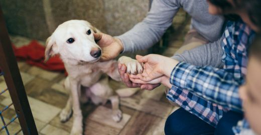 Saiba qual perfil de cachorro é mais indicado para a sua rotina
