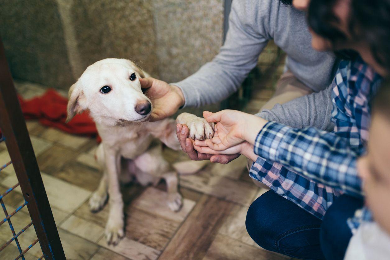 família adotando cachorro