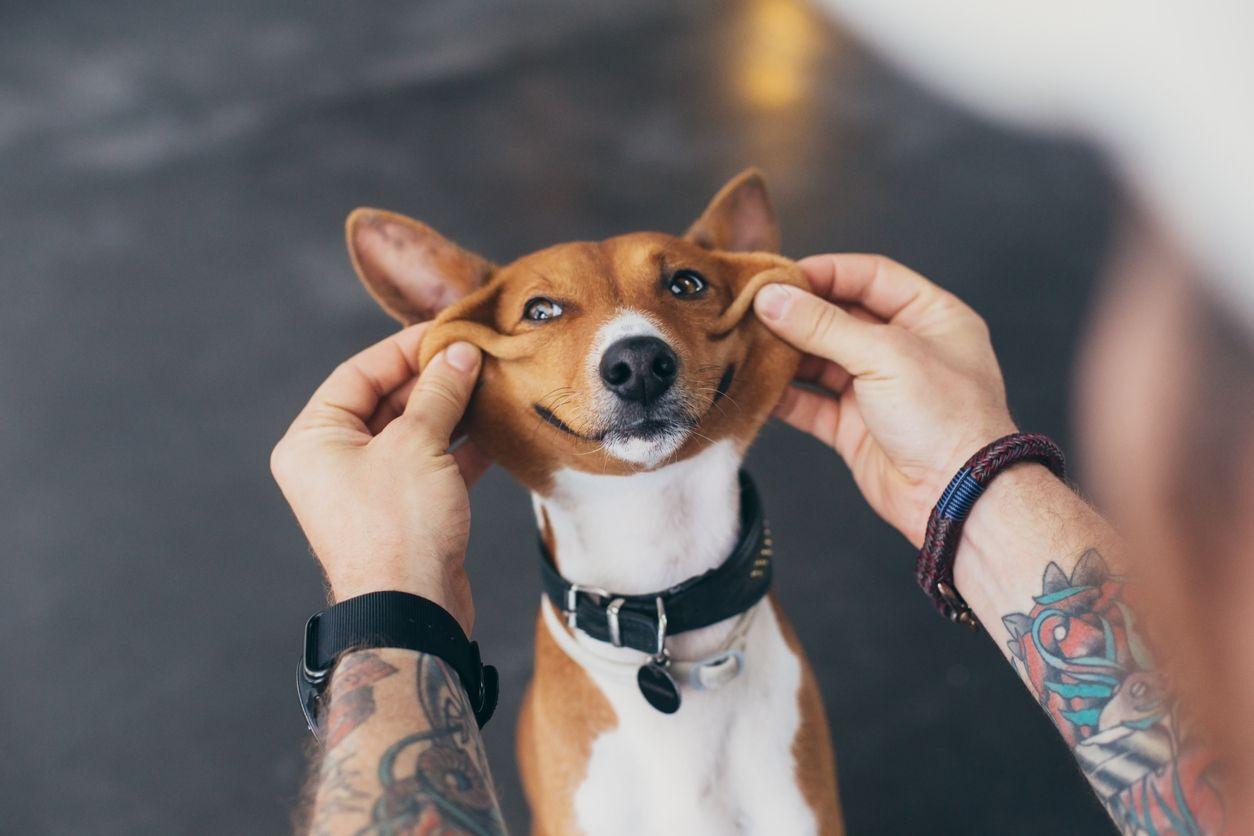 cachorro sorrindo