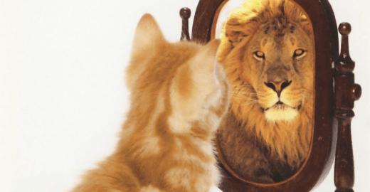 Lição do aumento da audiência da Catraca: nunca abandone seu leão