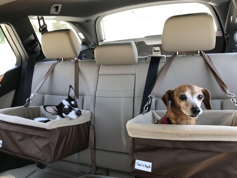dois cachorros em cadeiras de transporte no banco de trás do carro