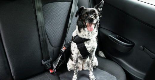 Como transportar cachorros e gatos de forma segura no carro