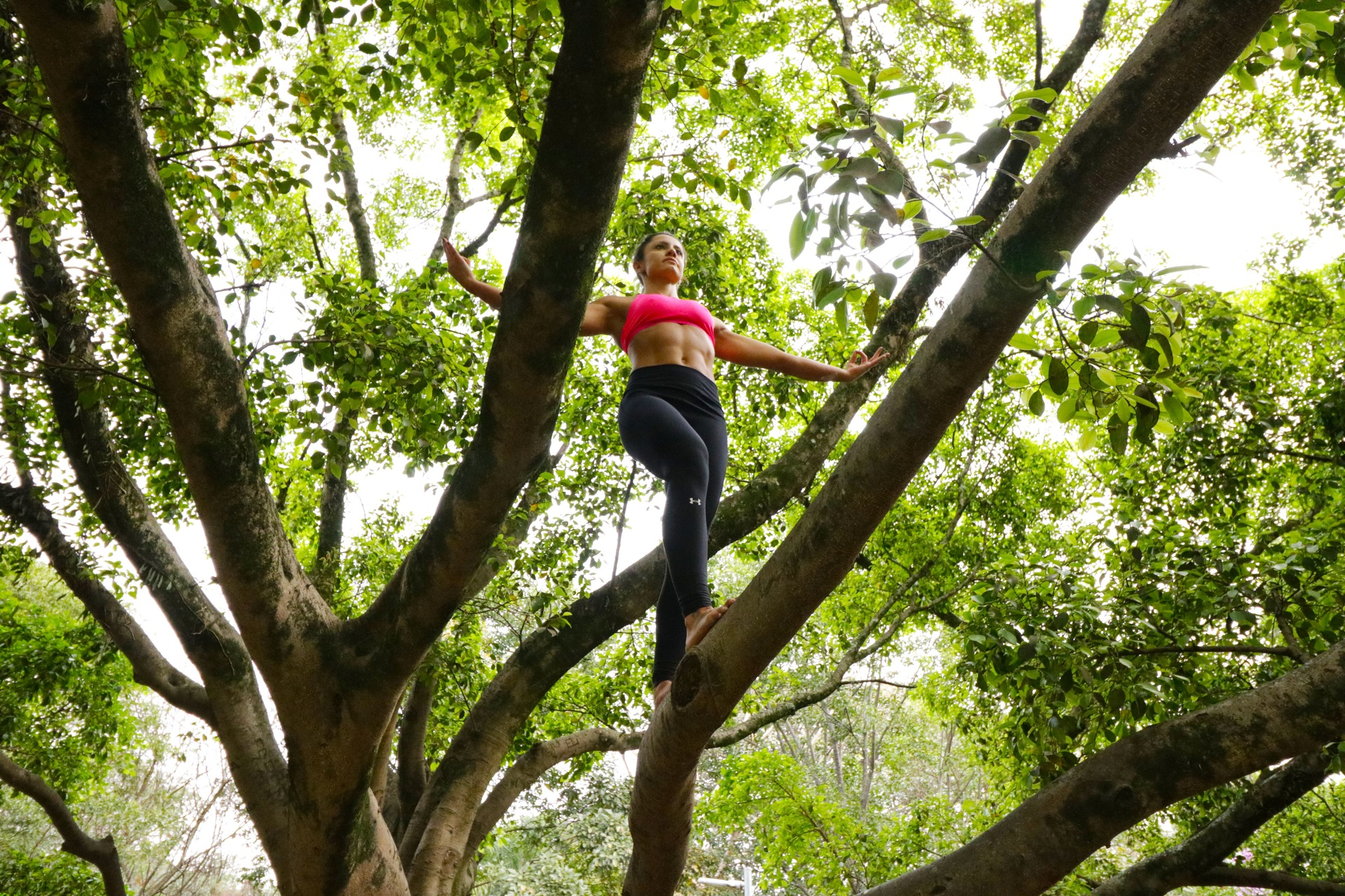 mulher se equilibrando na árvore