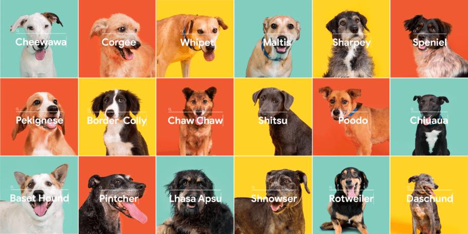 A campanha de adoção de cachorros batizou vira-latas com os nomes errados das raças