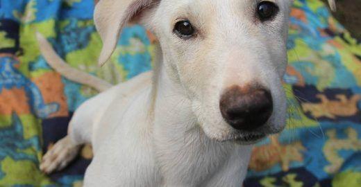 Projeto de adoção de cachorros dá lar a 70 mil animais em 10 anos