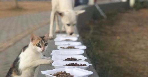 Diferentes formas de ajudar animais abandonados