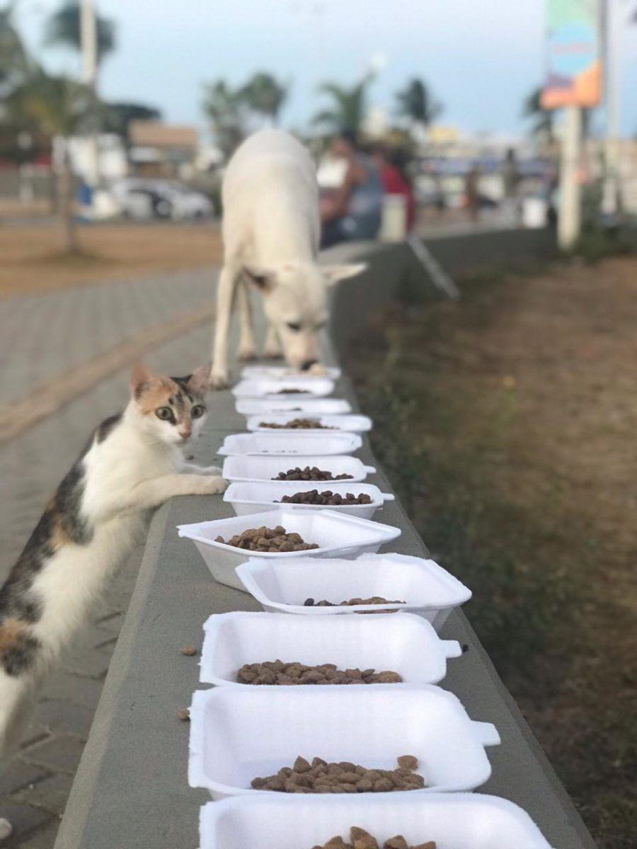 cachorro e gato comendo em potinhos na rua