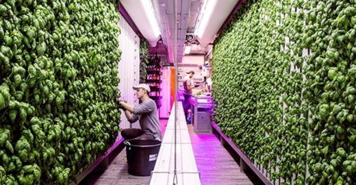 Confira 7 iniciativas de menor impacto ambiental em alimentação