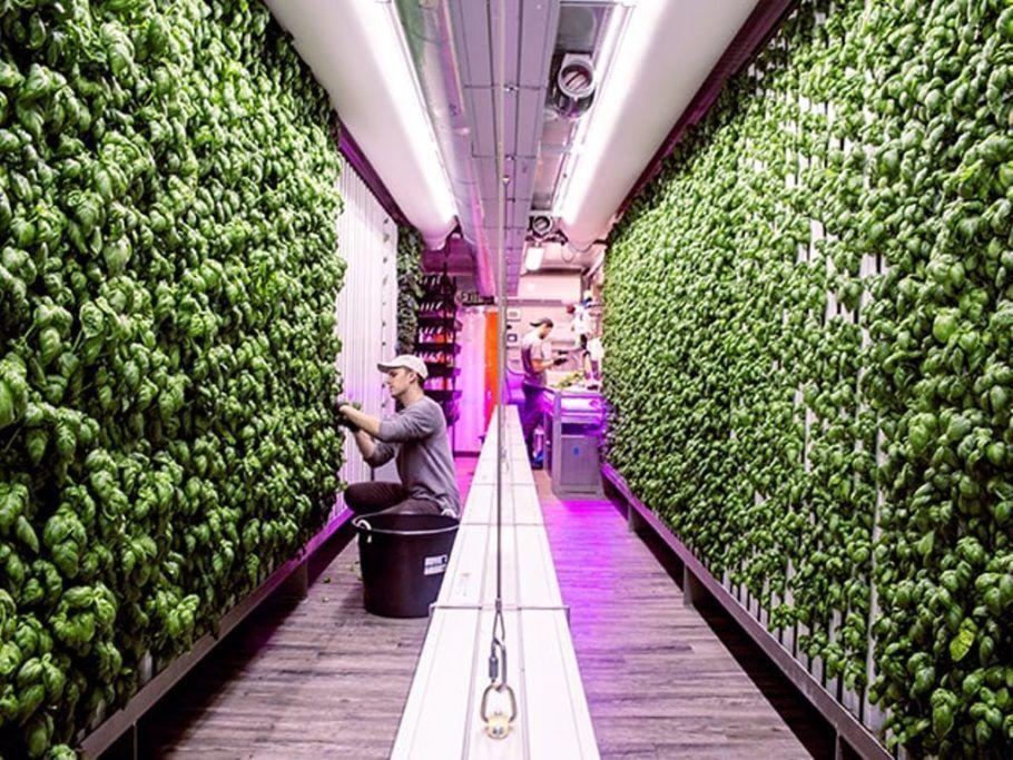 Fazenda urbana em Nova York produz ervas sem pesticidas nem modificações genéticas