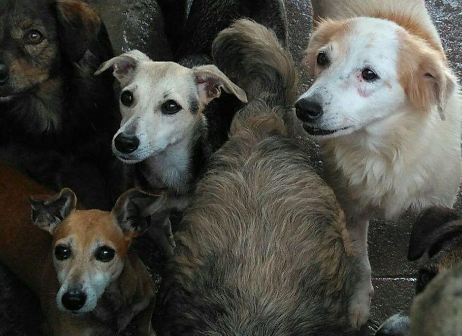 vários cães no abrigo