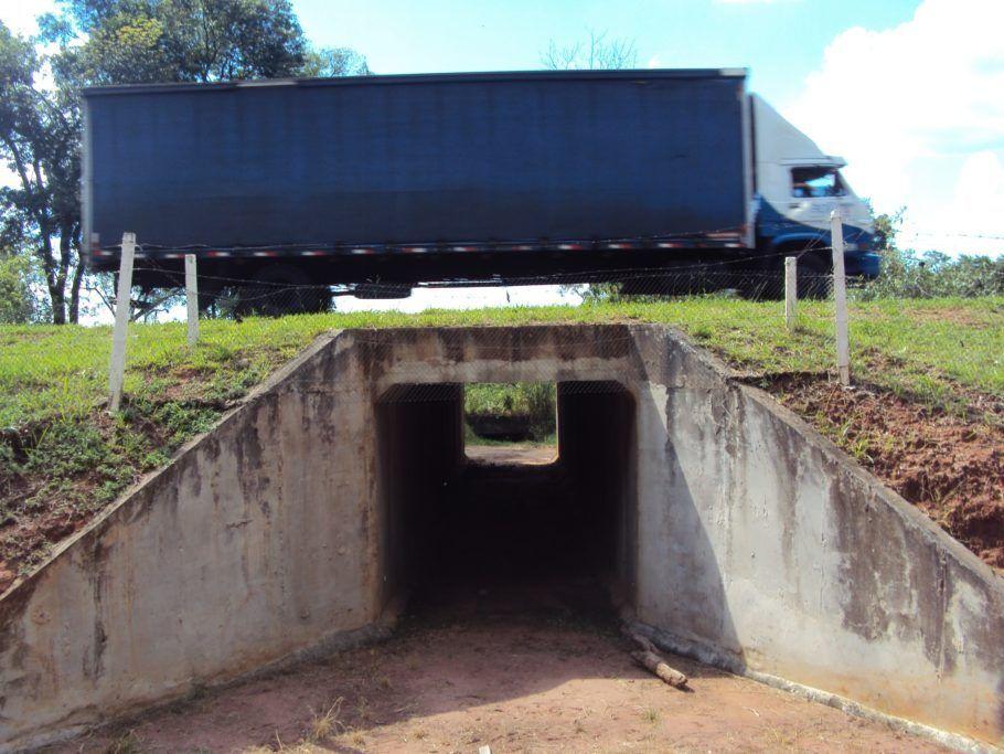 Contra o atropelamento: passagem sob rodovia para a travessia de animais