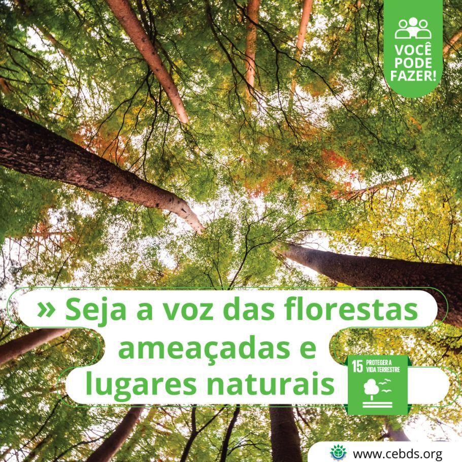Já plantou uma árvore hoje?