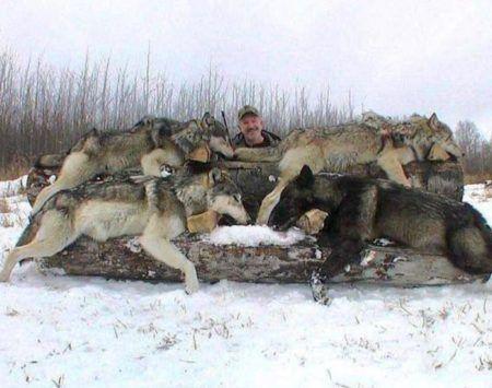 animais vítimas de evento de caça