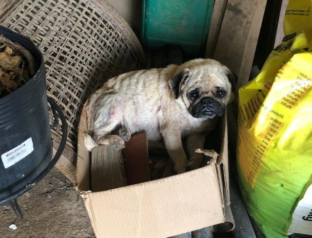 cão encontrado em canil clandestino