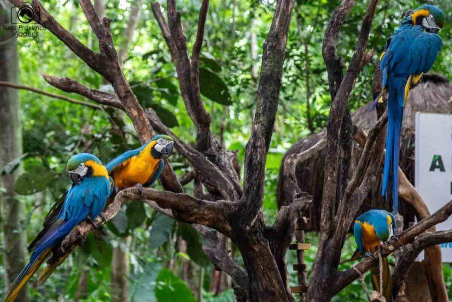 Foto das Araras no Parque das Aves em Foz do Iguaçu