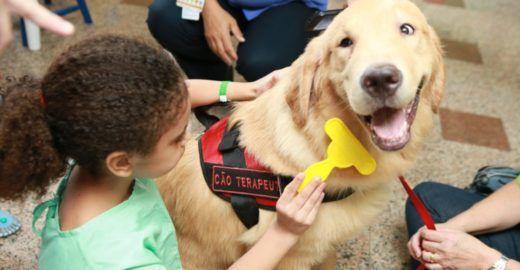 O cachorro com  título de doutor ajuda crianças com câncer