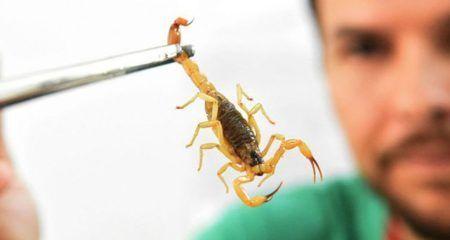 homem segurando um escorpião com uma pinça