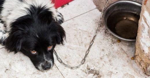 Como denunciar maus-tratos contra animais
