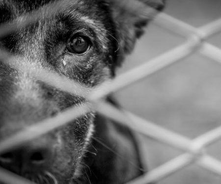 cãozinho com carinha triste