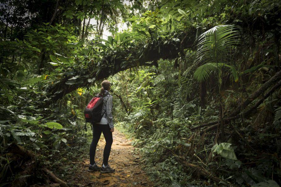 Pelo novo Código Florestal, de 2012, toda propriedade rural na Mata Atlântica precisa ter, no mínimo, 20% de área recoberta por floresta nativa