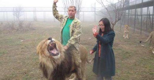 Zoo abusa de leões e permite que visitantes entrem em jaulas