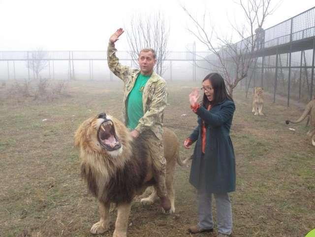 leão sofre abusos em zoológico