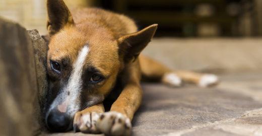 Abril Laranja: mês de combate mundial aos maus-tratos animais