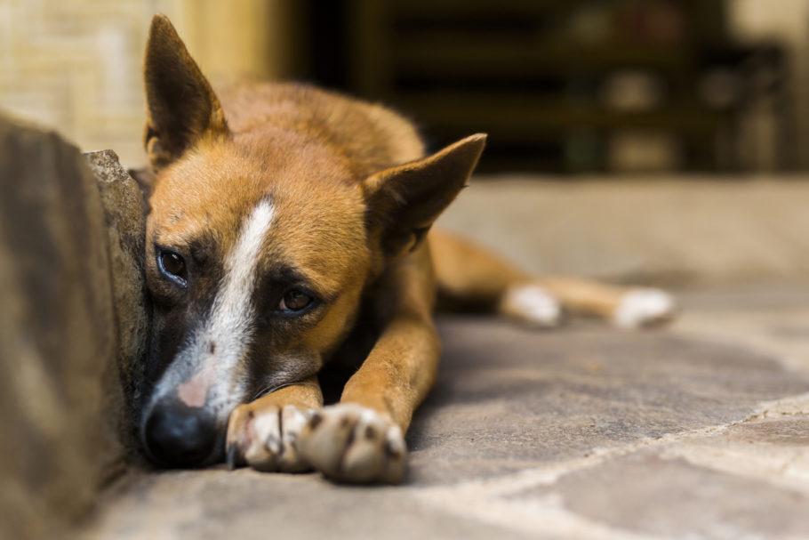cachorro deitado com cara de triste