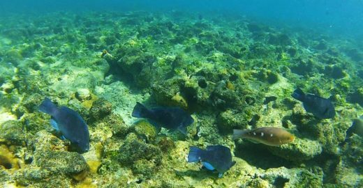 Ministério deu aval para Ibama liberar petróleo em Abrolhos