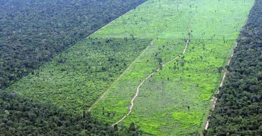 Cientistas pedem proteção ambiental para comércio com Brasil