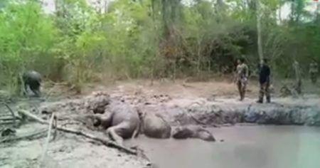 elefantes bebês presos na lama
