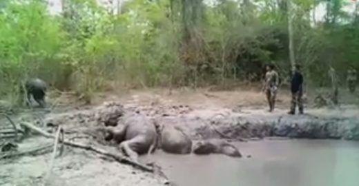 Elefantes bebês são resgatados de poço de lama