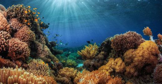 Escolha certa de protetor solar evita morte de corais