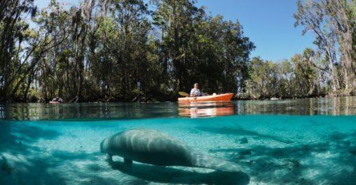 Descubra Crystal River, a cidade santuário de peixes-boi