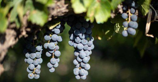 Road trip pela América do Sul: pausa para degustar bons vinhos