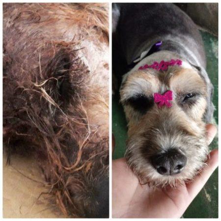 cachorro antes e depois de ser tratado pelo projeto