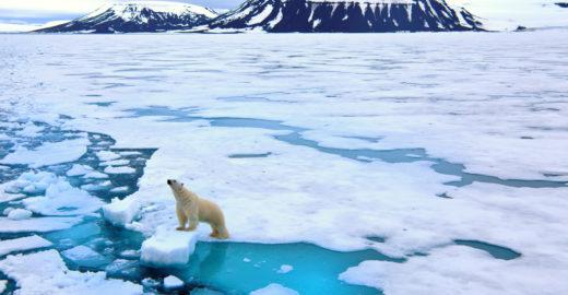 Urso polar é encontrado desnutrido a 700 km de casa na Rússia