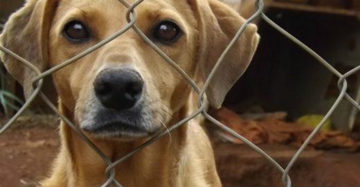Adoção de cães e gatos dá desconto no IPTU em SC