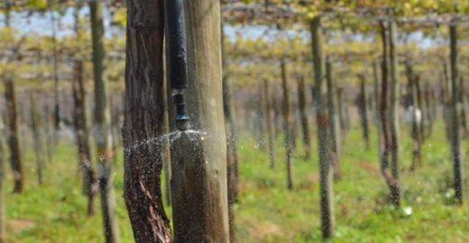Agricultura de precisão melhora o consumo de água