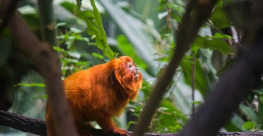 Um milhão de animais e plantas estão ameaçados de extinção
