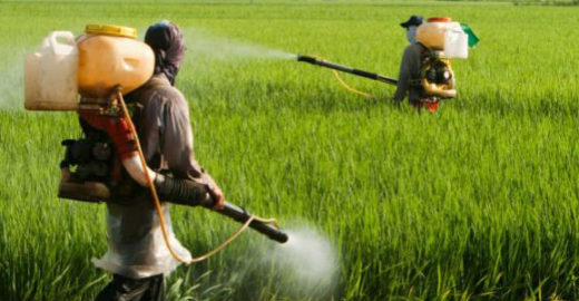 Herbicida causará autismo em 50% das crianças até 2025, diz cientista