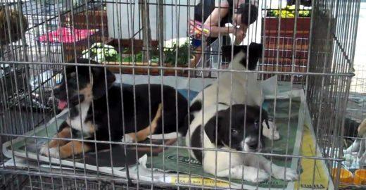 Avenida Paulista terá feira de adoção de animais