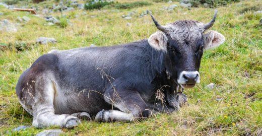 Projeto prevê proteção aos animais em caso de desastre ambiental