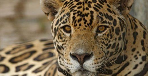 ONGs, artistas e políticos assinam manifesto contra a caça