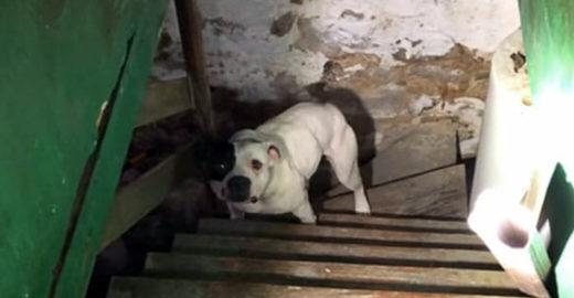 Novo proprietário resgata cão acorrentado deixado na casa