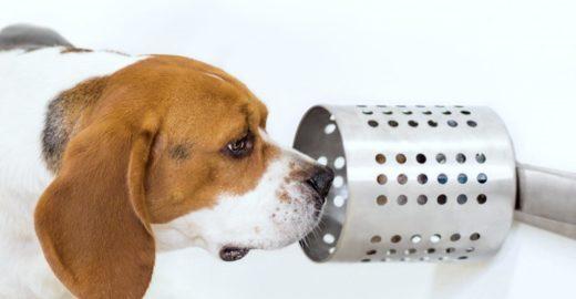 Cães podem farejar câncer no sangue e saliva com 97% de precisão