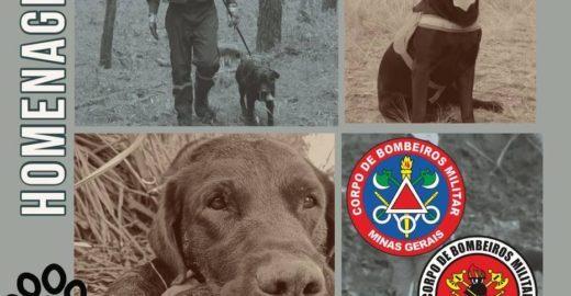 Cão que ajudou em resgates de Brumadinho morre fazendo buscas