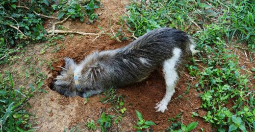 Cão encontra bebê que tinha sido enterrado vivo debaixo de lixos