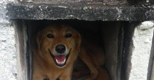Cães comunitários permanecerão no Cemitério de Osasco